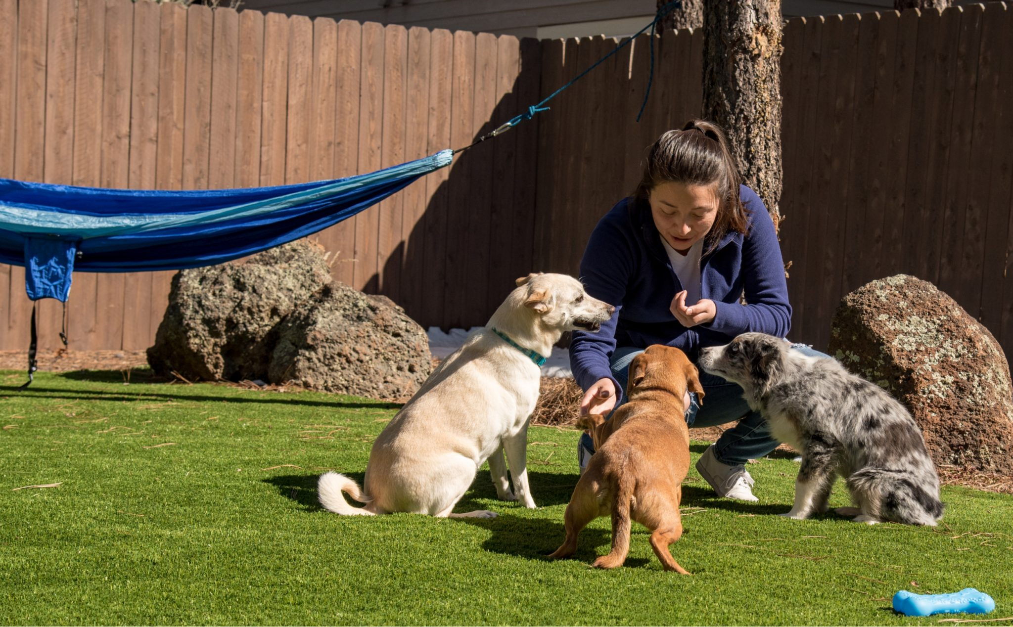 How to Remove Pet Hair from Artificial Grass